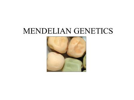 MENDELIAN GENETICS. OBJECTIVES Understand Mendel's principles governing genetics Understand meaning of relevant vocabulary Predict results of mono/dihybrid.