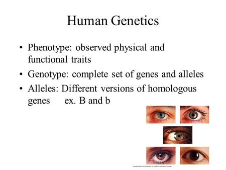 Human Genetics Phenotype: observed physical and functional traits Genotype: complete set of genes and alleles Alleles: Different versions of homologous.