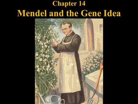 Chapter 14 Mendel and the Gene Idea. Law of Segregation: