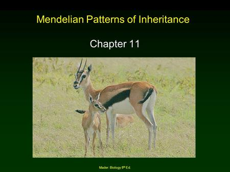 Mendelian Patterns of Inheritance