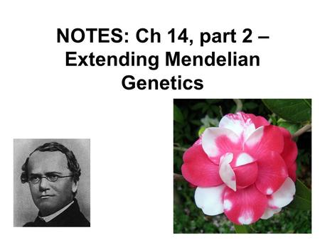 NOTES: Ch 14, part 2 – Extending Mendelian Genetics