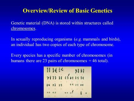 Overview/Review of Basic Genetics Genetic material (DNA) is stored within structures called chromosomes. In sexually reproducing organisms (e.g. mammals.