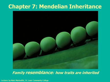 Chapter 7: Mendelian Inheritance