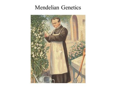 Mendelian Genetics. The laws of probability govern Mendelian inheritance Mendel's laws of segregation and independent assortment reflect the rules of.