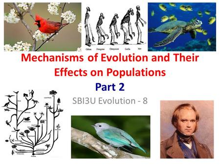 Mechanisms of Evolution and Their Effects on Populations Part 2 SBI3U Evolution - 8.