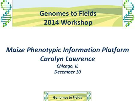Genomes to Fields 2014 Workshop Maize Phenotypic Information Platform Carolyn Lawrence Chicago, IL December 10.