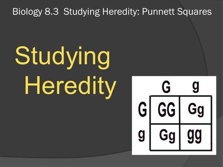 Biology 8.3 Studying Heredity: Punnett Squares Studying Heredity.
