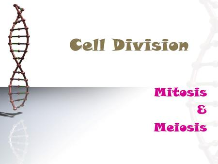 Cell Division Mitosis & Meiosis. Mitosis cell division somatic cell (body cell)  The form of cell division by which a eukaryotic somatic cell (body cell)