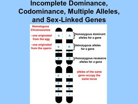 Incomplete Dominance, Codominance, Multiple Alleles, and Sex-Linked Genes.