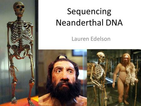 Sequencing Neanderthal DNA Lauren Edelson. Road Map Sequencing ancient DNA: methods & outcomes (Review article) DNA sequencing to infer Neanderthal ancestry.