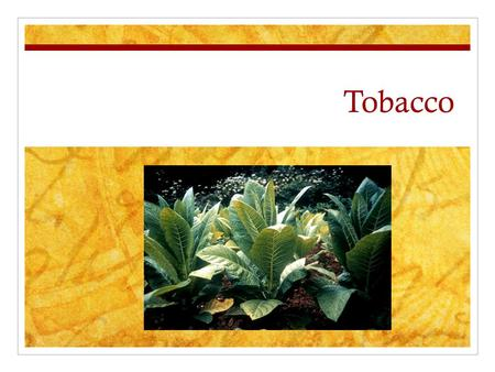 Tobacco. What is Tobacco? Tobacco starts as a plant. The tobacco plant naturally contains Nicotine. Tobacco products are made from dried up leaves from.
