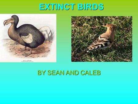 EXTINCT BIRDS BY SEAN AND CALEB.