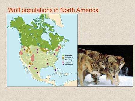 Wolf populations in North America. Black bear distribution:
