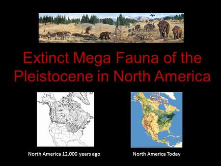 Extinct Mega Fauna of the Pleistocene in North America
