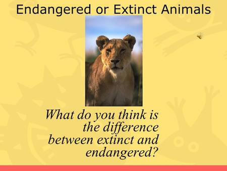 Endangered or Extinct Animals What do you think is the difference between extinct and endangered?