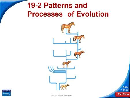 End Show Slide 1 of 25 Copyright Pearson Prentice Hall 19-2 Patterns and Processes of Evolution.