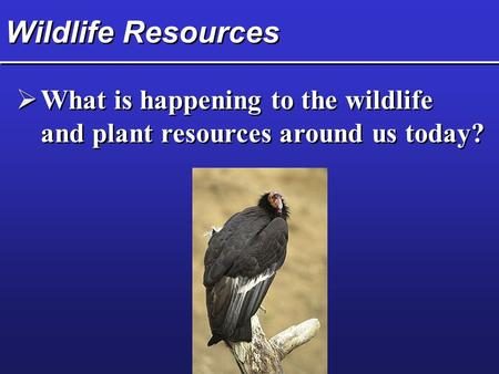 Wildlife Resources  What is happening to the wildlife and plant resources around us today?  What is happening to the wildlife and plant resources around.