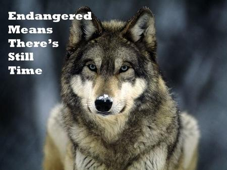 Endangered Means There's Still Time.