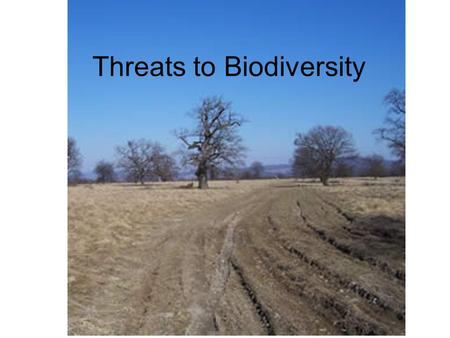 Threats to Biodiversity. Habitat Loss Deforestation: trees cut and never replanted (for timber or agriculture reasons) Tropical forests only cover 7%