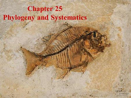Chapter 25 Phylogeny and Systematics. Phylogeny The evolutionary history of a species or a group of species over geologic timeThe evolutionary history.