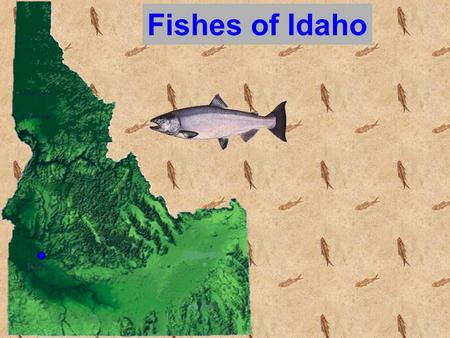 Fishes of Idaho. The Study of Fish = Ichthyology.