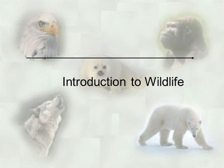 Introduction to Wildlife