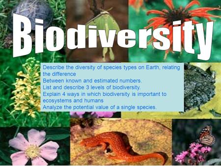 Biodiversity Describe the diversity of species types on Earth, relating the difference Between known and estimated numbers. List and describe 3 levels.