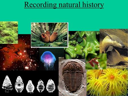 Recording natural history. Break-down of time Different periods of Earth's history are broken into periods of time,just like a year is broken into months,