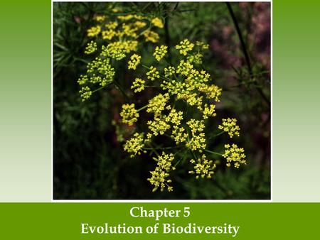 Chapter 5 Evolution of Biodiversity. Earth is home to a tremendous diversity of species Ecosystem diversity- the variety of ecosystems within a given.