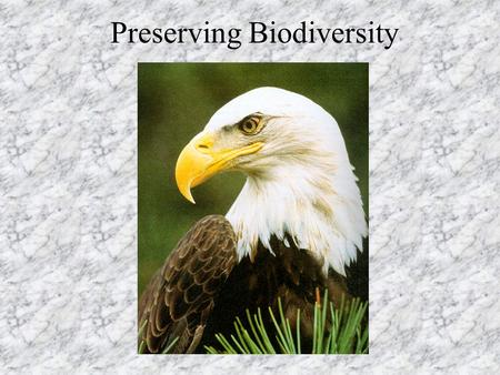 Preserving Biodiversity. How many species are there? 2.1 million currently described probably 3-50 million species –most of those undiscovered are insects,