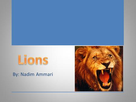 By: Nadim Ammari. Species of lions Facts Habitats Species of lions Facts Habitats.