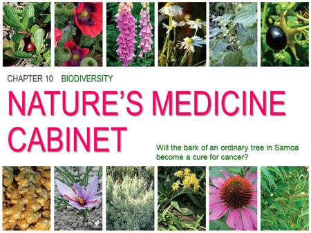 CHAPTER 10BIODIVERSITY NATURE'S MEDICINE CABINET CHAPTER 10 BIODIVERSITY NATURE'S MEDICINE CABINET Will the bark of an ordinary tree in Samoa become a.