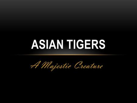 ASIAN TIGERS A Majestic Creature. Asian Tigers Tiger, a majestic creature that roams the plains of Asia. This creature is beautiful as well as ferocious,