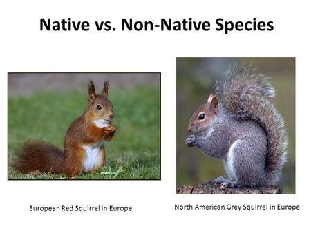 Native vs. Non-Native Species