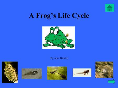 A Frog's Life Cycle By April Bandell Table of contents - Meet Mr. Frog Meet Mr. Frog -Mr. Frog as an eggMr. Frog as an egg - Mr. Frog as a tadpoleMr.