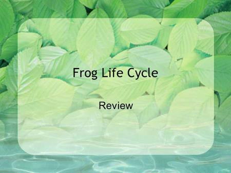 Frog Life Cycle Review A frog is an __. insect amphbian mammal fish.