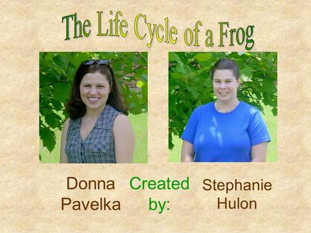 Created by: Donna Pavelka Stephanie Hulon What do you know about frogs?