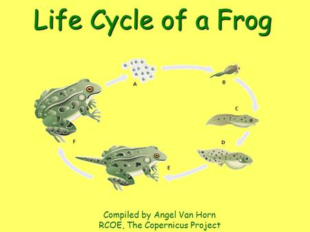 Life Cycle of a Frog Compiled by Angel Van Horn