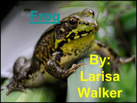 Frog By: Larisa Walker. Dorsal Mouth Internal Male Female 1 2.