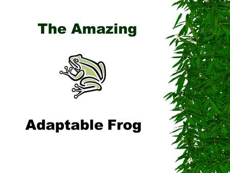 The Amazing Adaptable Frog  Toad???  Frog???  Toad???  Frog???  What gives?