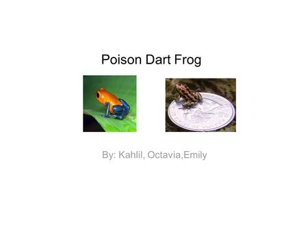 Poison Dart Frog By: Kahlil, Octavia,Emily. Facts The poison dart frog is about one inch. Their skin is poisonus. They have enough poison to kill up to.