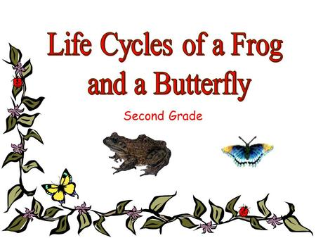 Second Grade These lessons are designed to reinforce: Sol 2.4 Life Processes 2.4The student will investigate and understand that plants and animals undergo.
