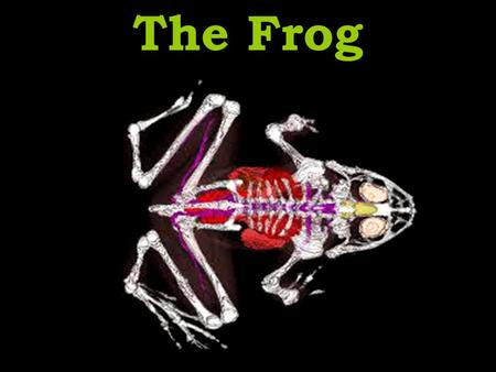 The Frog. Skeletal System Notice the names of the leg bones. –Same as ours! We will be looking at the bones as time permits at the end of the dissection.