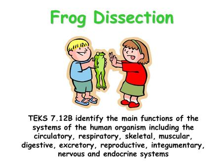 Frog Dissection TEKS 7.12B identify the main functions of the systems of the human organism including the circulatory, respiratory, skeletal, muscular,