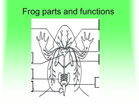 Frog parts and functions. 1 Heart Pumps blood to carry oxygen, food, carbon dioxide, wastes.