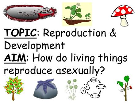 TOPIC: Reproduction & Development AIM: How do living things reproduce asexually?