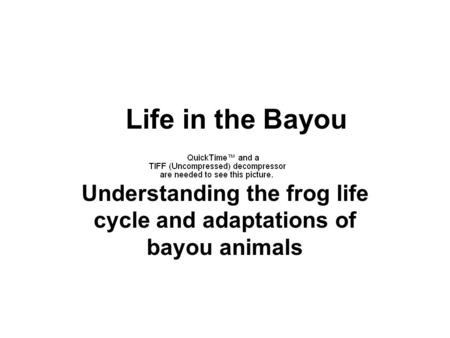 Life in the Bayou Understanding the frog life cycle and adaptations of bayou animals.