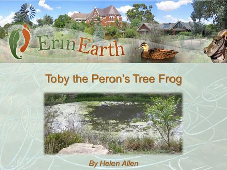 Toby the Peron's Tree Frog By Helen Allen. Just how did I go from Tobes the Tadpole to Toby the frog? Tobes Toby.