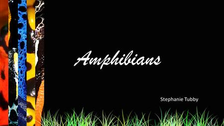 Amphibians Stephanie Tubby. Select a amphibian to learn about: Agalychnis callidryas Rhacophorus nigropalmatus Dendrobatidae Exit.
