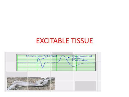 EXCITABLE TISSUE. The contractile property of the muscle is studied by using the frog's gastrocnemious –sciatic nerve preparation. This is also called.